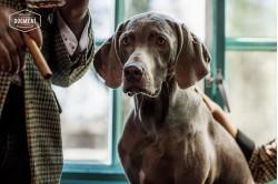dogmeat-ente-rindfleisch
