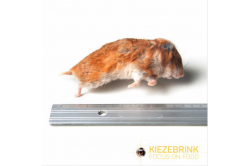Syrian Hamster mix 50-170 g