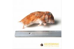 Syrischer Hamstermix 50-170 g