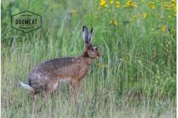Kaninchen, Rückenstücke