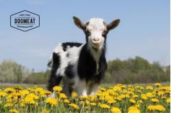 Lamb trimmings 80/20