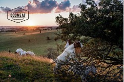 dogmeat-geit-compleet