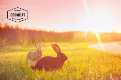 Kaninchen Komplett