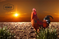Chicken - Beef Tripe Compleet