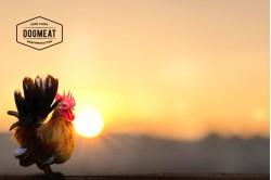 Chicken - Beef Compleet