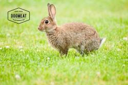 dogmeat-kiezebrink-konijn