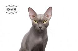 Masterclass Kitten - Huhn - Lachs