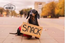 dogmeat-snack-tekkel