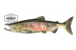 Salmon bodies