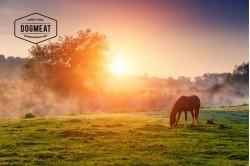 Pancreas Horse