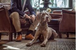 dogmeat-Huhn-Rindfleisch-Lamm