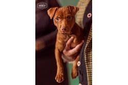 dogmeat-kip