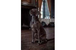 dogmeat-turkey