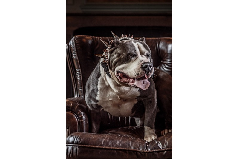 dogmeat-goat
